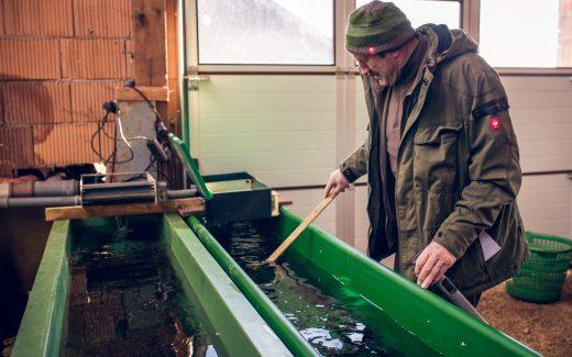 Fischzucht Fränkische Schweiz